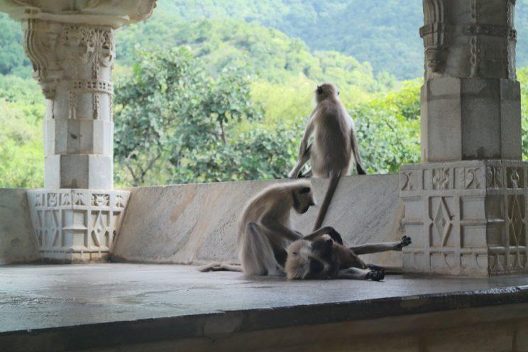 indien_reise_einundzwanzigzwei_affen_tempel