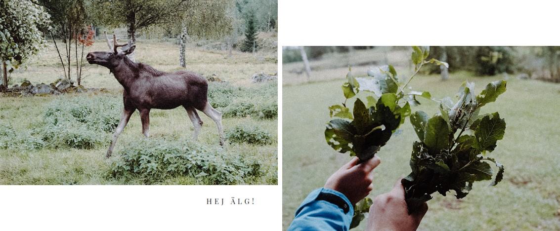 schweden-blog-leipzig-gedanken-liebe-elch-elchpark