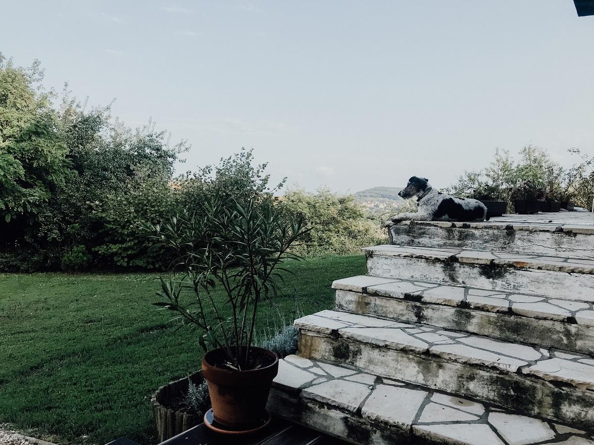 urlaub-ungarn-sommer-2018-einundzwanzigzwei-blog-champion-hund